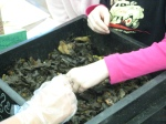 third grade habitat experts 022