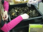 third grade habitat experts 023