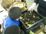 third grade habitat experts 029
